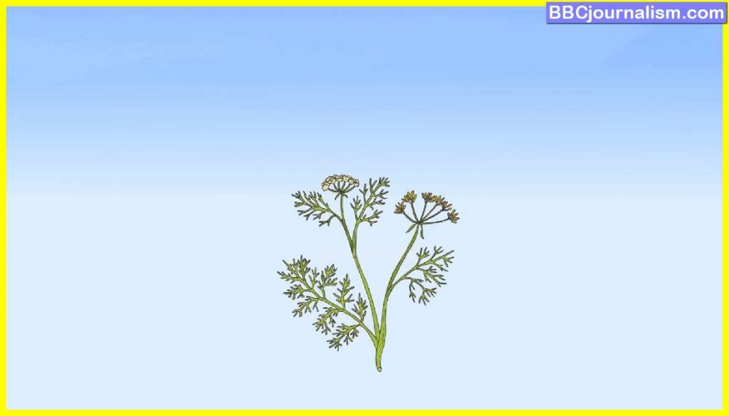 Top 10 Herbs for Lung Health 11