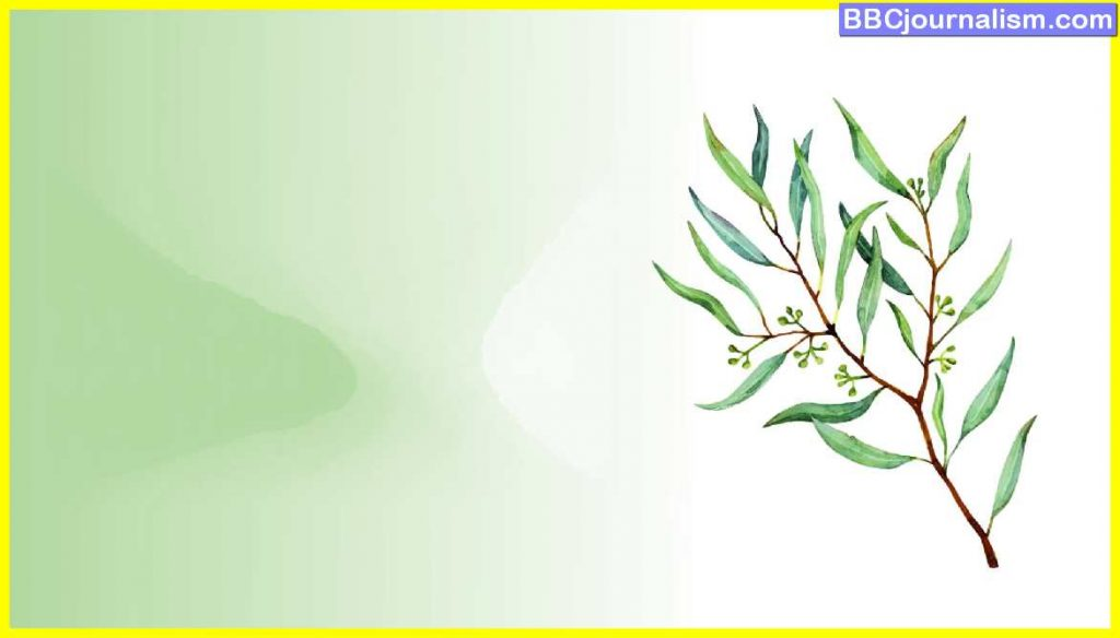 Top-10-Herbs-for-Lung-Health