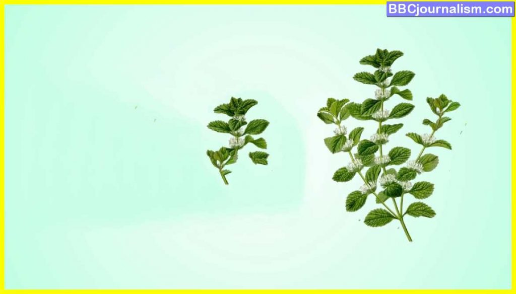 Top 10 Herbs for Lung Health 16
